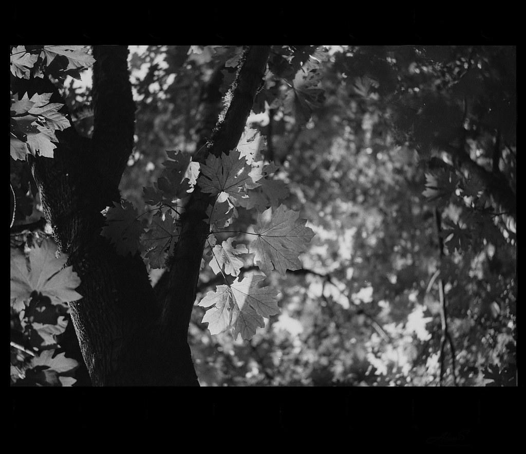 lights - film Canon