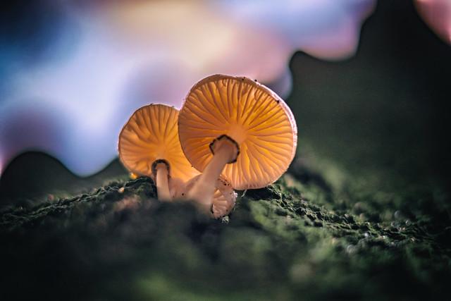 ---mushroom---