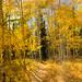 Willow Creek Falls trail vista, autumn