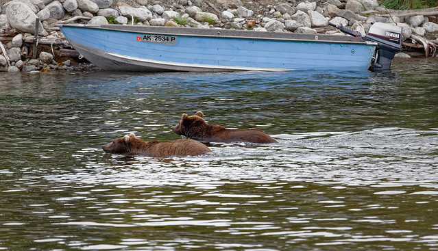 See Things Differently in the World Around (Katmai National Park & Preserve)