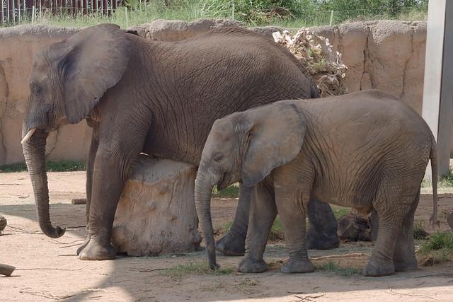 Mapenzi and Nandi, Reid Park Zoo, September 2021