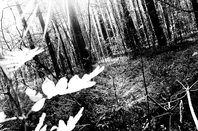Forest Poetry #2