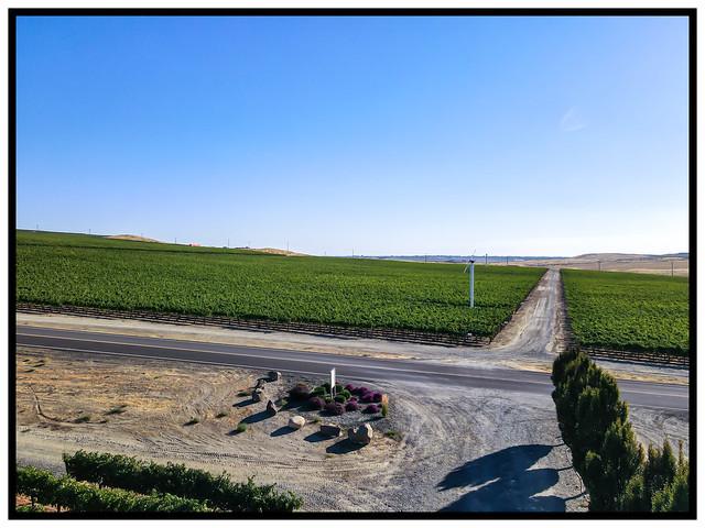 Drone's Eye View of Vinyards