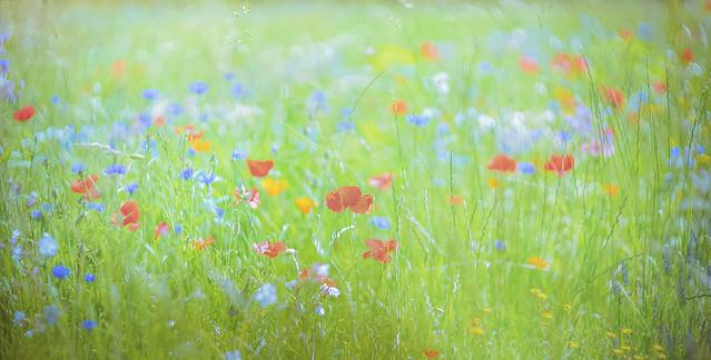 meadow memories [summer twenty one]