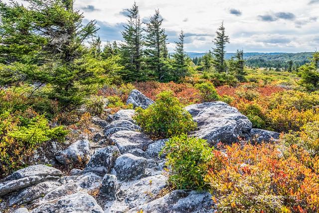 The Monongahela Wilderness