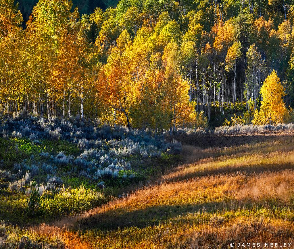 Patterns of Fall