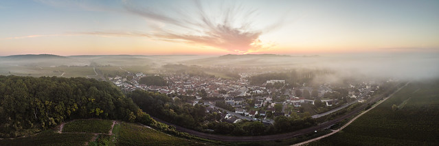 Avenay Val d'Or - Under the mist