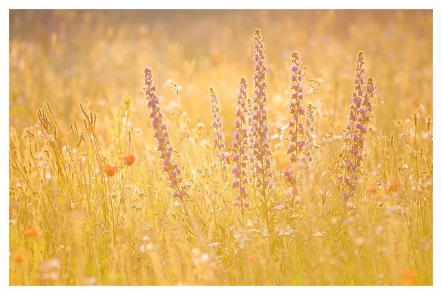 meadow in the backlight