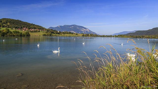 Le lac des  cygnes..... (on Explore 09/2021)