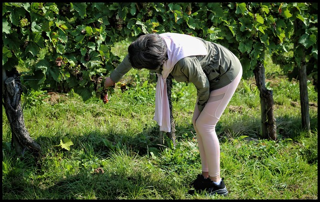 I heard it thru the grapevine