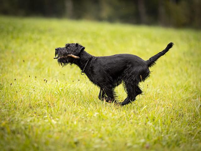 Bailey: the joy of sticks