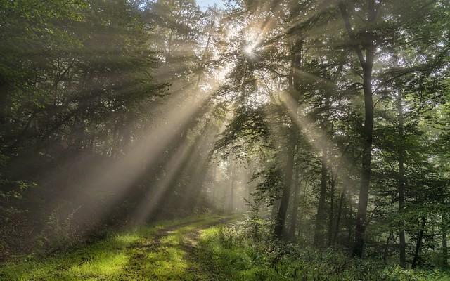 *forest light*
