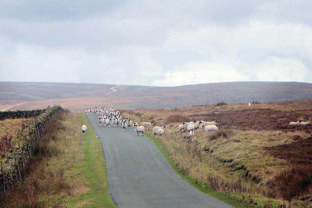 The Road through Nidderdale