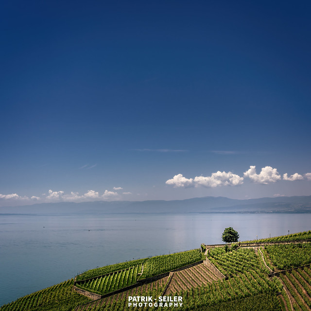 WATER TO WINE - Lavaux, - Switzerland