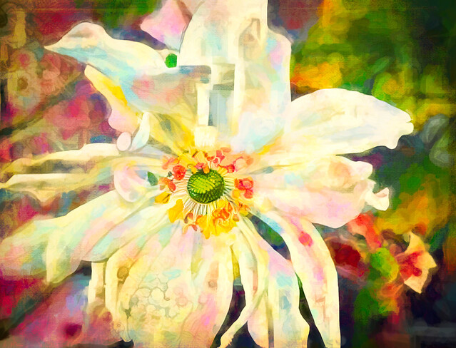 Abstract Anemone brings Autumn Cheer