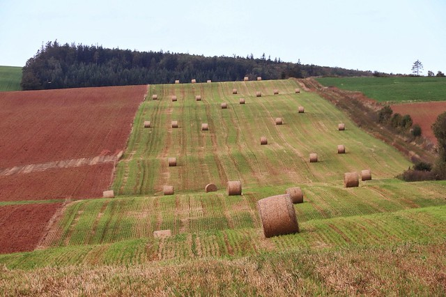 Tilted Field