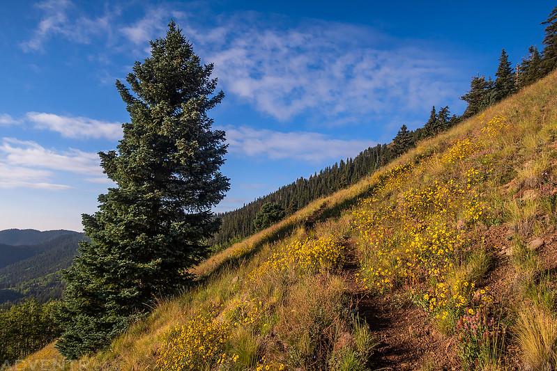 Gooseberry Trail Flowers
