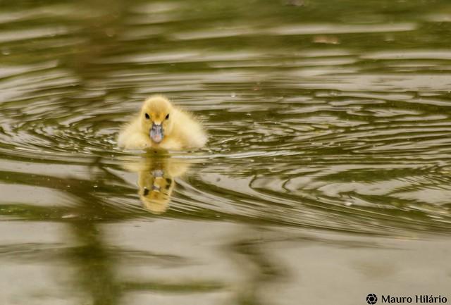 Ducky business