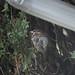 rain_sparrow-20210926-100