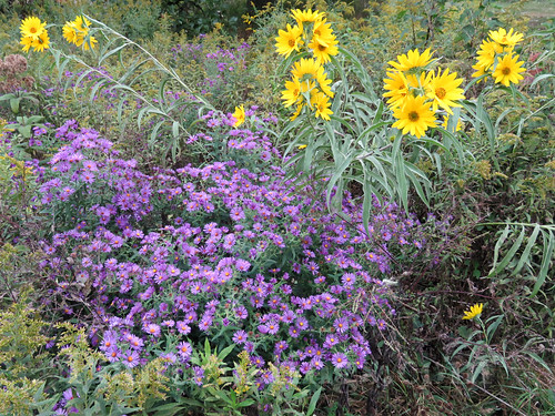 asters and sunflowers