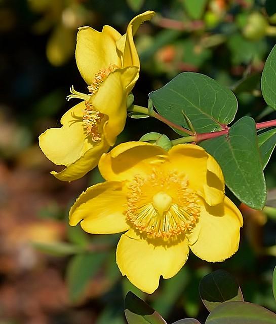Yellow Flowers!