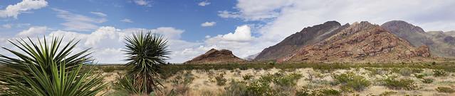 Chihuahuan Desert Landscape