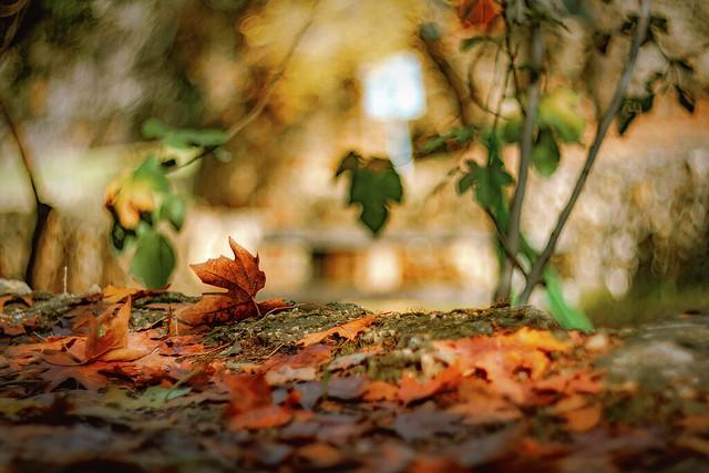 leaves, Various