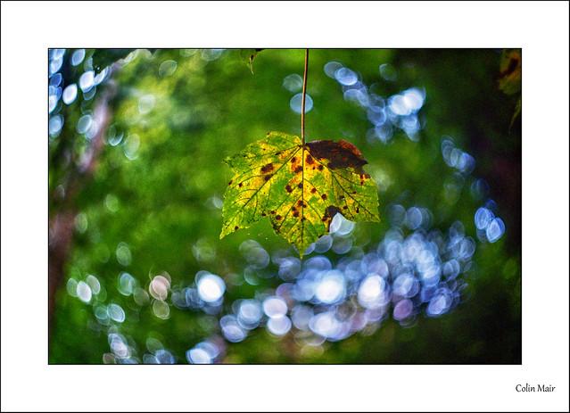 Autumn Bokeh - Zenit-E, Helios 44-2, 58mm, Dundonald, 1/125th, f2.8, 11th Sept 2021