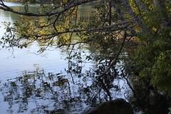 Where vegetation meets lake