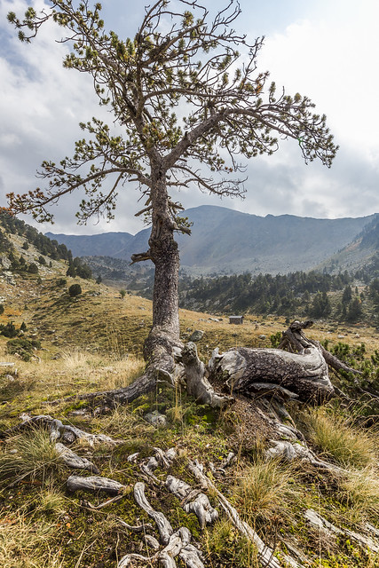 Orri de la Pleta de la Serrera, Andorra