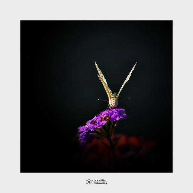 2021_09_Papillon