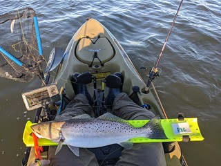 Photo of a spotted sea trout on a kayak