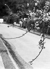 Casi Primavera en Chiguayante