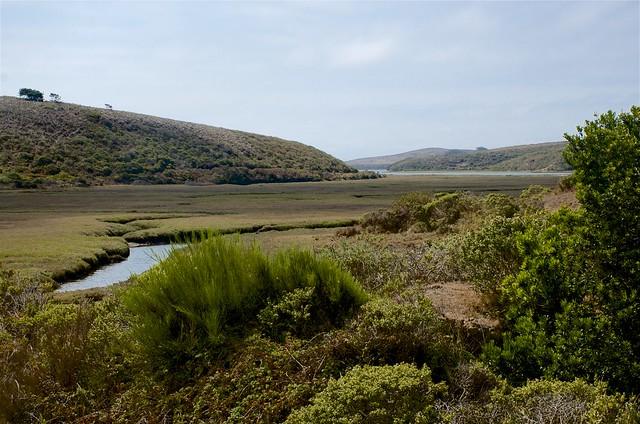 Back Estuary