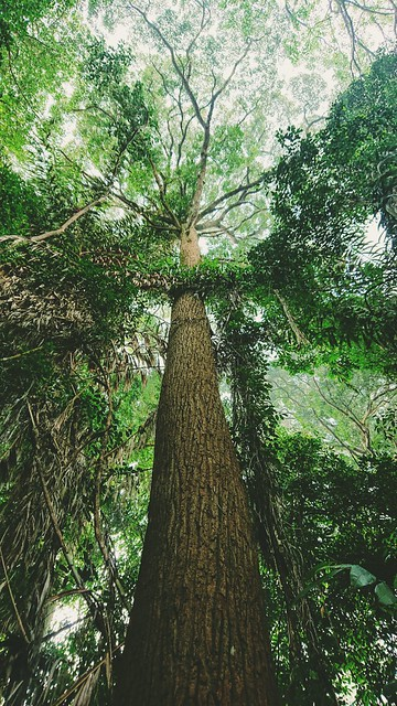 270: arboreality