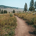 Dirt hiking trail to Wraith Falls in Yellowstone National Park