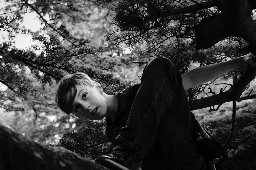BOY IN A TREE 3