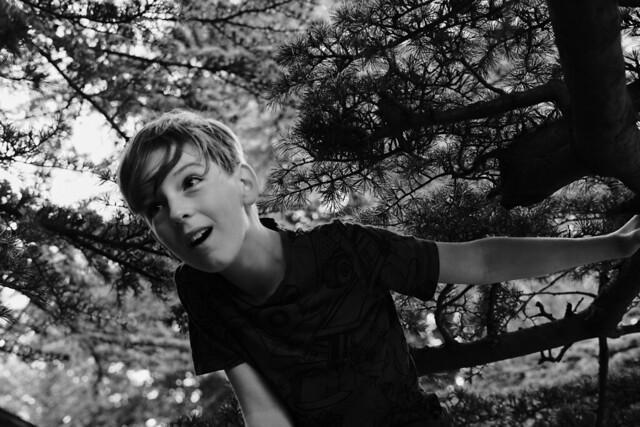 BOY IN A TREE 1
