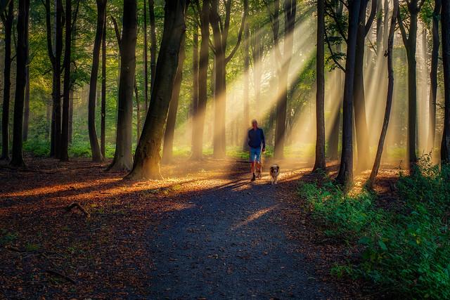 Walking the dog in Ryckevelde wood