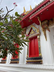 I will never get tired of shiny temple window decorations & red shutters
