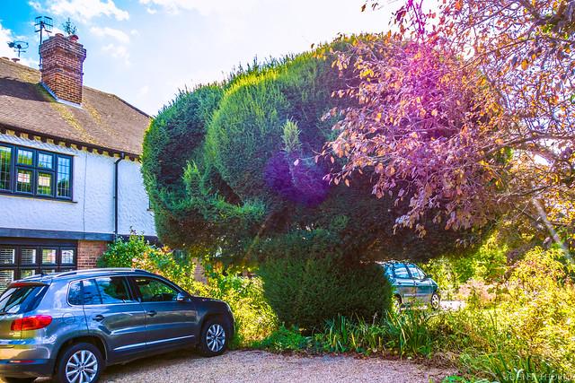 Elephant Topiary Tonbridge Garden