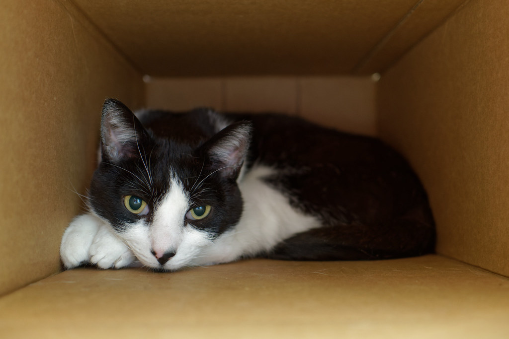 Our cat Boo relaxes in a deep box on September 12, 2021. Original: _RAC9285.arw