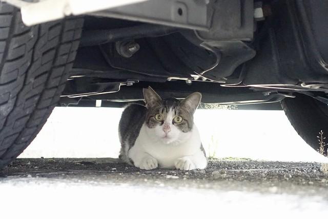 Today's Cat@2021−09−28