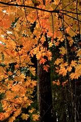 New Autumn