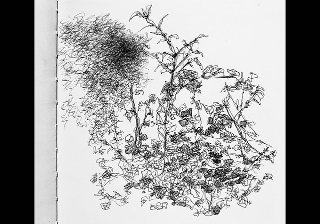 Ballpoint pen only Doodle sketch of part of the hedge in front of the Car, while waiting to pick up the Wife , this morning.