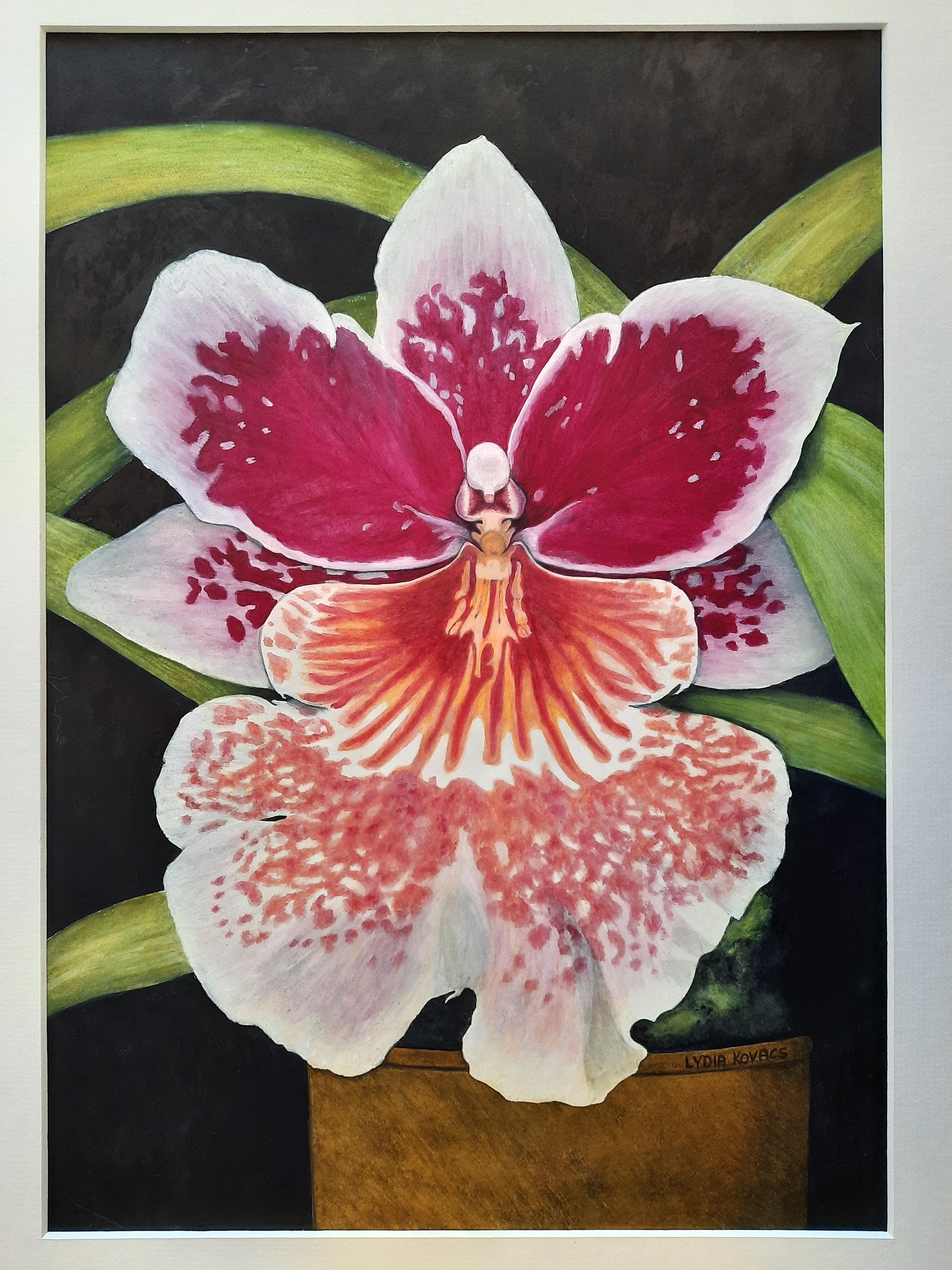 Art & Craft 316 Miltonia Orchid watercolour by Lydia Kovacs