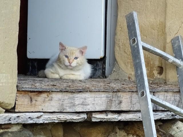 chat du Vercors