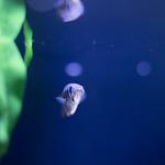 20210904 Hekinan Seaside Aquarium 4