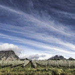 10. September 2014 - 16:46 - South African Clouds over the Pear Trees.