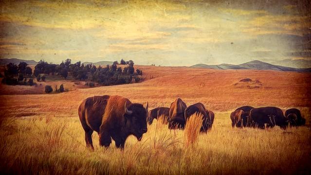 On The Prairie's